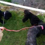 Dog Walk 6